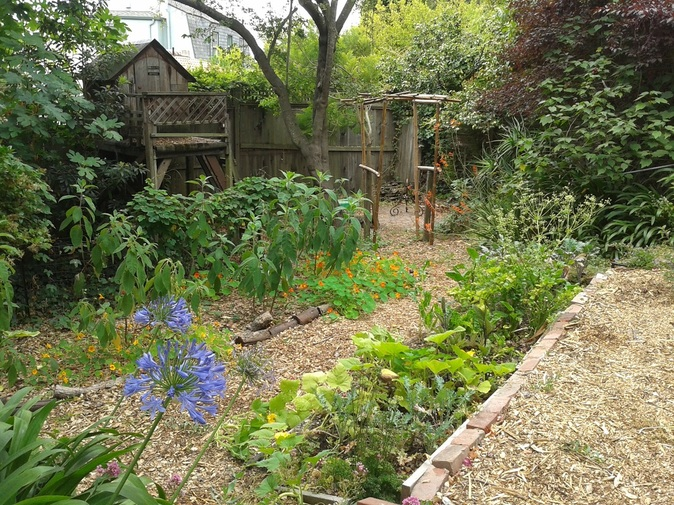 Organic food forest permaculture
